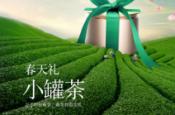 经过冬的蕴育 茶树正在期待春的脚步 小罐茶科普春茶知识