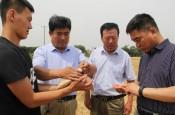 阳信:请博士传授小麦高效种植技术助力乡村振兴