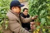 阳信:温店镇被评为山东省级农业产业强镇
