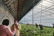 "CKSB生态农业游成""三八妇女节""亮丽风景"